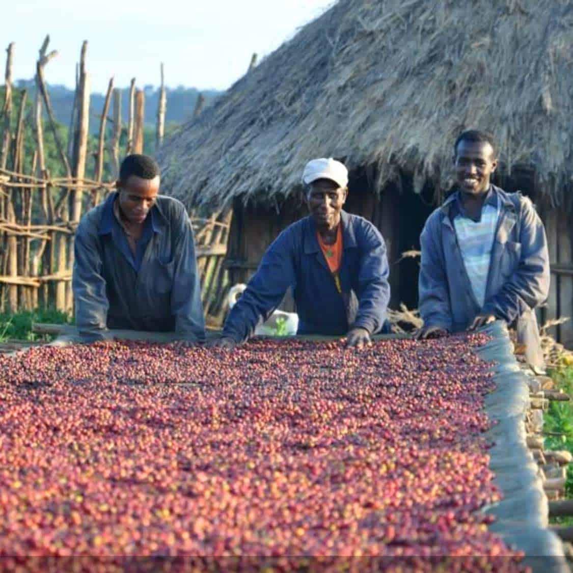 Limmu Natural Ethiopian Coffee Sunrise